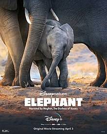 sinopsis elephant